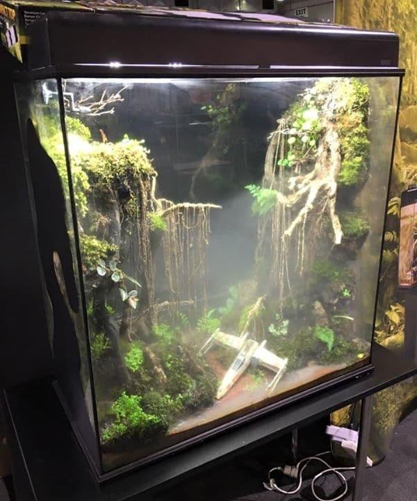 dagobah-terrarium