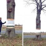 Levitazione paranormale o street-art?