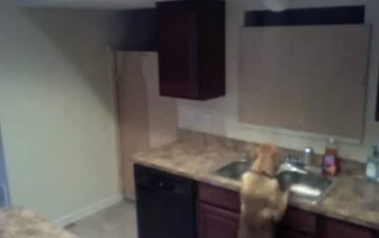 cane-escapologo