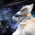 I cani, il vento e i viaggi nel tempo
