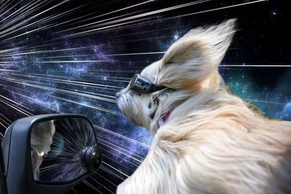 cani-viaggiatori-nel-tempo