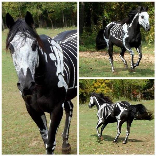 cavallo-scheletro (600 x 600)