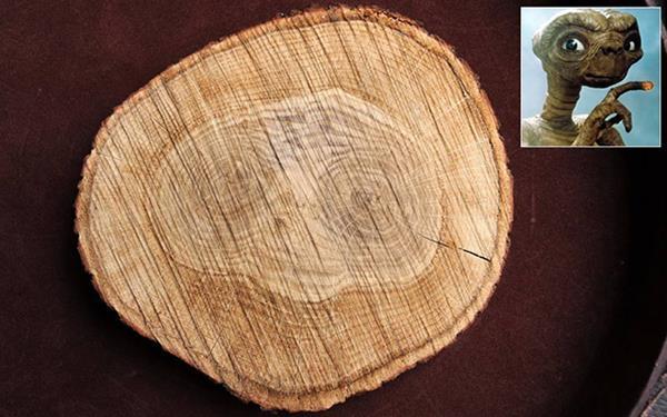 et-ceppo-di-legno