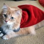 Il gatto di Thor