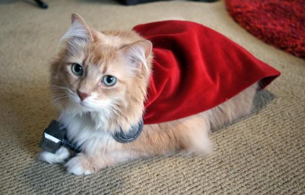 gatto-thor