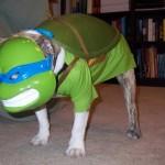 Ecco il cane-ninja, una maschera a 4 zampe