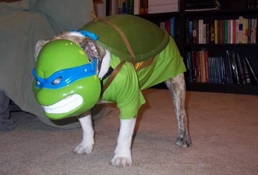 Ecco Il Cane Ninja Una Maschera A 4 Zampe Geekjournal