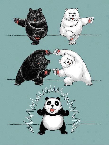 panda-orso