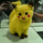 Gatto Pikachu