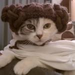 Principessa Leila… la gattina!