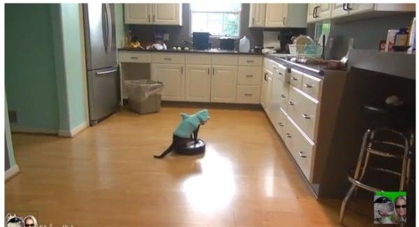 roomba-gatto-squalo