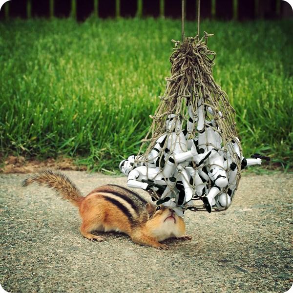 scoiattoli-star-wars-2