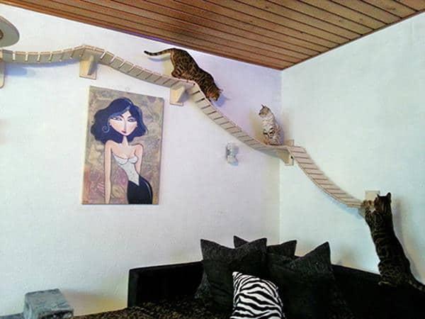 stanza-gatta3