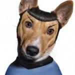 La passione dei cani per Star Trek