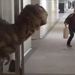 Un velociraptor in ufficio